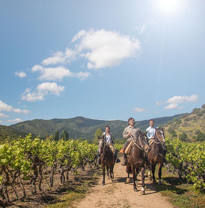 Fotografía de tres personas cabalgando entre viñedos de la región de El Maule