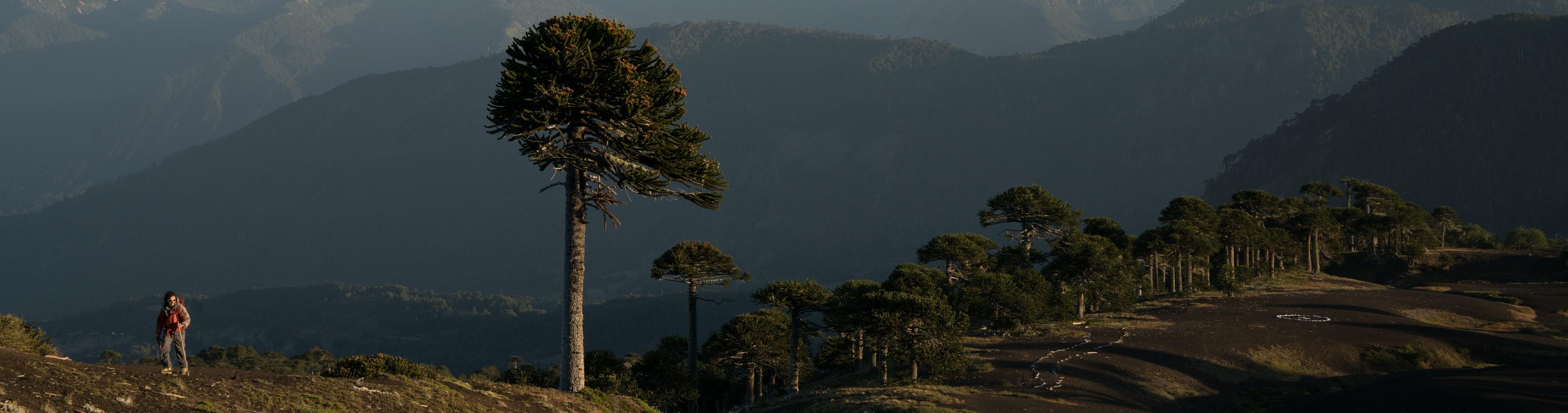 Unesco declara a Kütralcura como el primer geoparque mundial de Chile